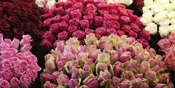 Как купить цветы на голландском аукционе доставка цветов из новосибирска в пскове
